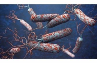 Kolera 19 kişinin canını aldı!