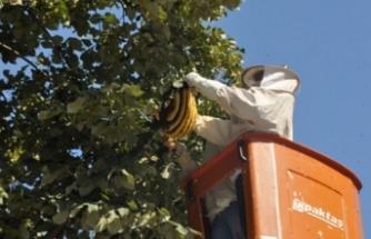 Bursa'da o mahallede arı paniği!