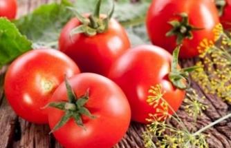 Flaş domates açıklaması: Kilosu 10 lira olacak