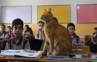 'Tombi', sınıfa geri döndü