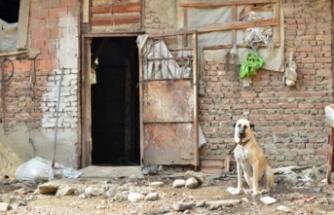 Bursa'da çocuğa saldıran köpeklerle ilgili flaş gelişme!