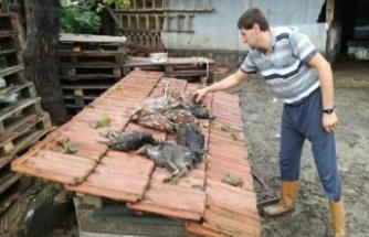 Bursa'da evleri su bastı, onlarca hayvan telef oldu
