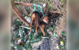 İğrenç olay! 'Ağaca bağladıkları köpeğe tecavüz ettiler' iddiası
