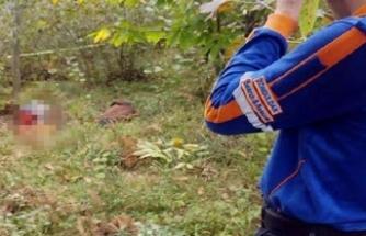 Kestane ve mantar toplamaya gittiği ormanda ölü bulundu