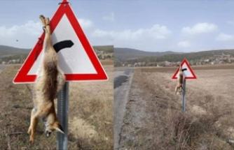 Vahşet! Öldürüp trafik levhasına astılar!