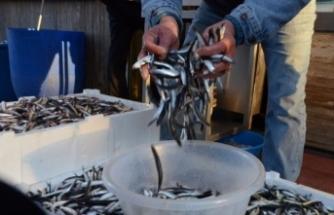 Balıkçılar uyardı, fiyatı yükselebilir