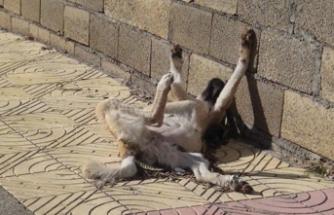 Sokak köpeği donarak telef oldu