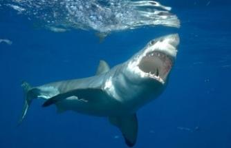Köpek balığı saldırısına uğradı