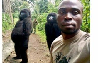 Gorillerden selfie pozu