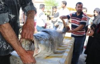 83 kilogram ağırlığında turna balığı yakalandı