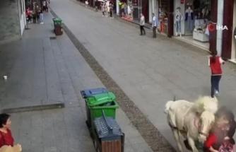 Çin'de hızla koşan at yayaların arasına daldı