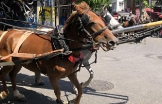 Adalar'da 30 derecede faytona koşturulan atlar yürekleri sızlatıyor