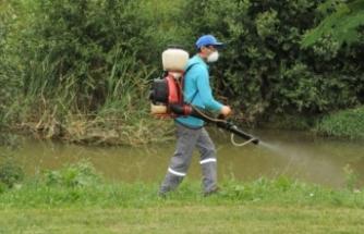 Bursa'da sivrisinek alarmı!