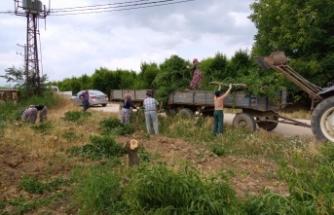 Bursa'da üretici son çareyi verimli ağaçlarını kesmekte buldu