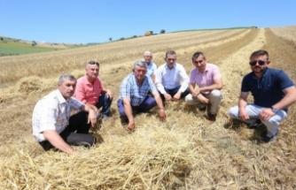 Bursa Yenişehir Ovası'nda buğday hasadı yeniden başladı