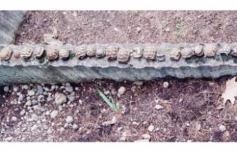 Mezarlıkta yan yana dizili 23 kaplumbağa ölüsü bulundu!