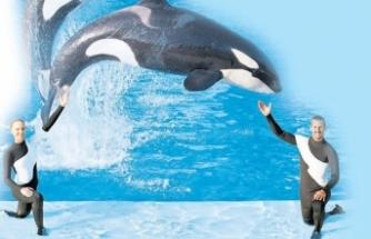 Balina eğitmenlerinden itiraf: Korkunç acı çekiyorlar