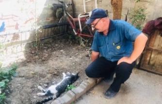 Bursa'da 4 yıldır baktığı kedisini tüfekle vurulmuş halde ölü buldu