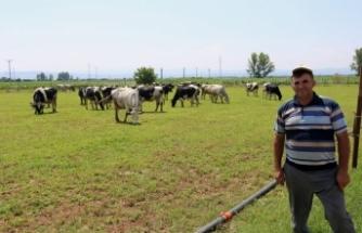 Bursalı süt üreticileri, ineklerini kasaplara satıyor