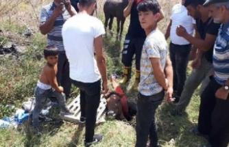 Çukura düşen at ile tay kurtarıldı