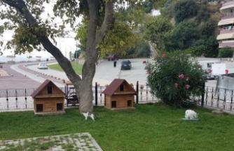 Kedi evleri Gemlik Belediyesi'nden