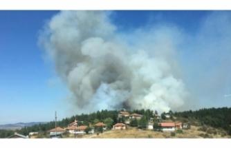 10 hektar orman yandı!