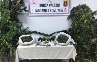 Bursa'da ektikleri kenevirleri sularken yakalandılar