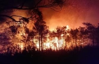 Yıldırım düşmesi sonucu orman yangını çıktı