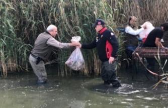 Bursa'da avlanması yasak olan ördekler kafeste bulundu