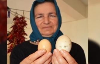 Dev yumurtayı görünce şaşkına döndü!