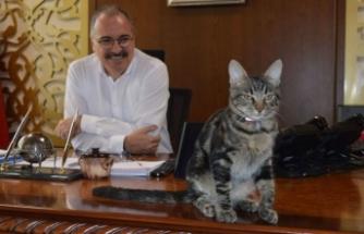 Ölmek üzere olan köpeği ve kediyi, Mersin Kaymakamı Ersin Emiroğlu sahiplendi
