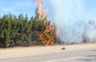 Bursa'da yangın! Kaynak kıvılcımı çam ağaçlarını yaktı