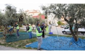 """Mudanya'da """"Topraktan Halka Zeytinyağı"""" uygulaması"""