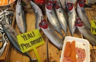 Balıkçı da tüketici de palamutu bekliyor