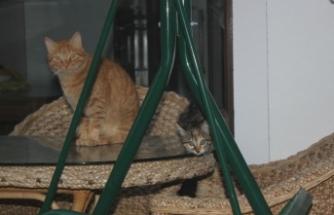 Sokak kedisi 4 kişiyi hastanelik etti
