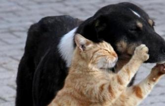 Hayvanlara karşı suçlara 'hayvan polisi' geliyor