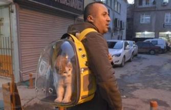 Sahiplendiği sokak kedisini sırt çantasında gezdiriyor