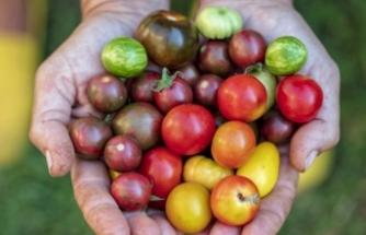 """""""Türkiye'de tüketilen biber, domates ve salatalıkların yüzde 15'i zehirli"""""""