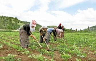 Mevsimlik tarım işçilerine özel önlem talebi