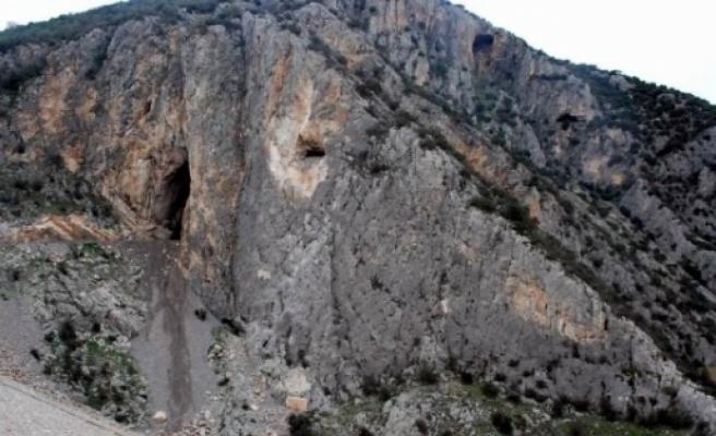11 Milyon Zeytin Ağacını Yarasalar Koruyor