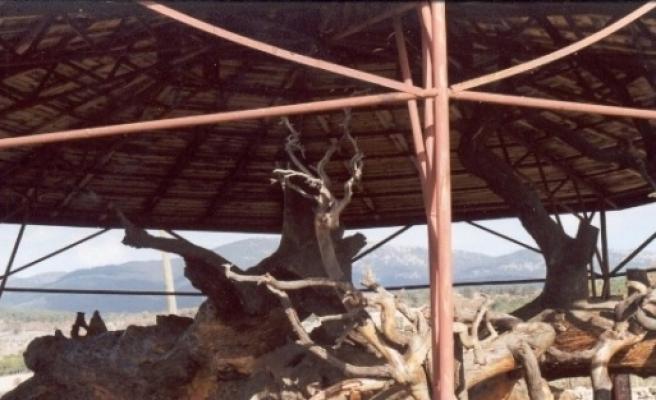 12 Asırlık Çami Tarihi Yaşatıyor