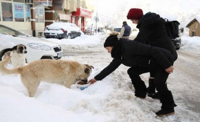 Gönüllü hayvanseverler seferber oldu