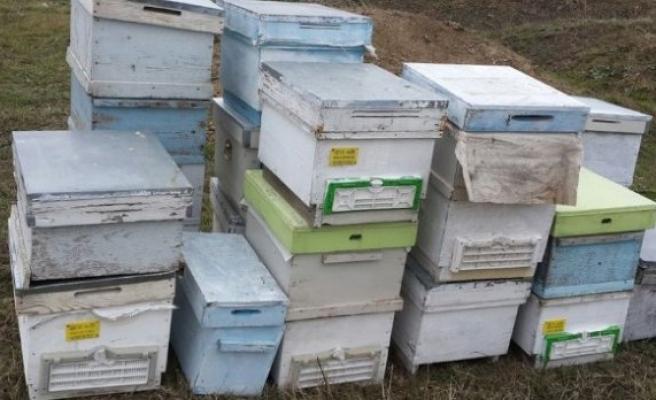 Bursa'da bal arısı kovanı çalan şüpheli yakalandı