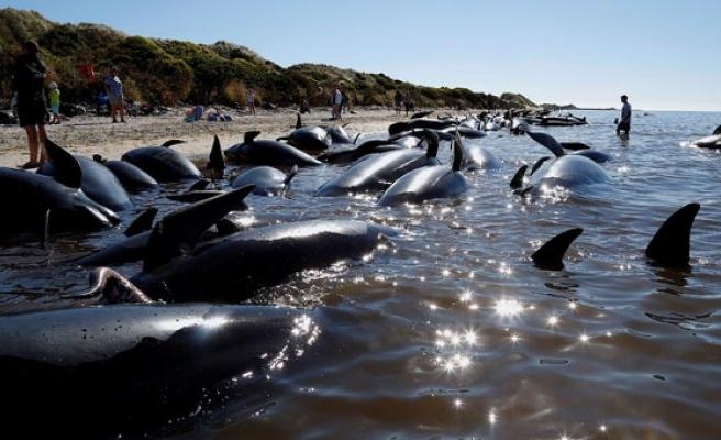 O balinalar hakkında korkutan iddia!