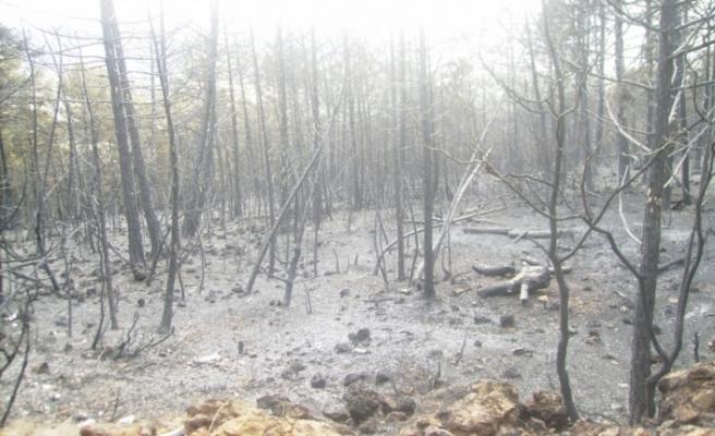 Bursa'da bir orman küllerinden doğuyor