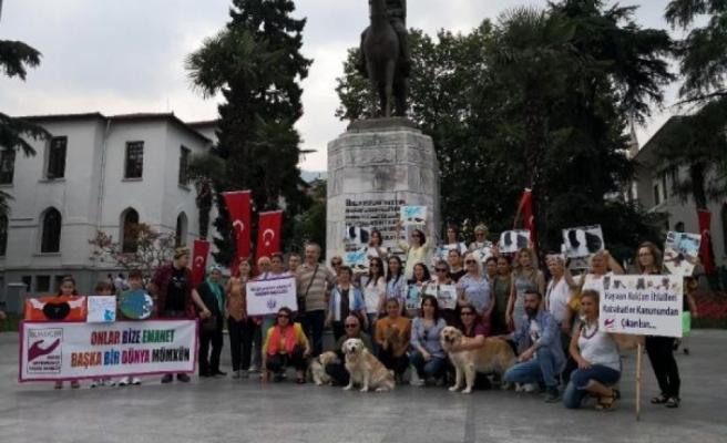 Bursa'da hayvanseverlerden son günlerdeki olaylara tepki