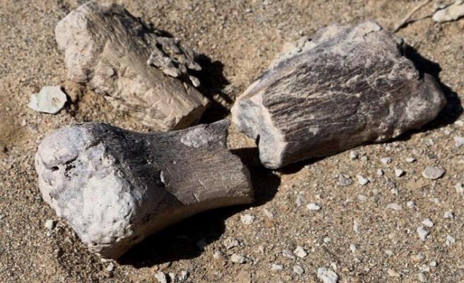 3 yeni dinozor türü bulundu