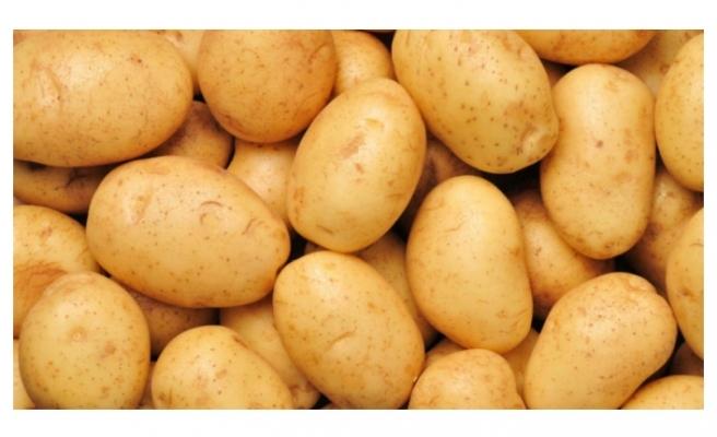 Hasat başladı! Patates fiyatları düşecek