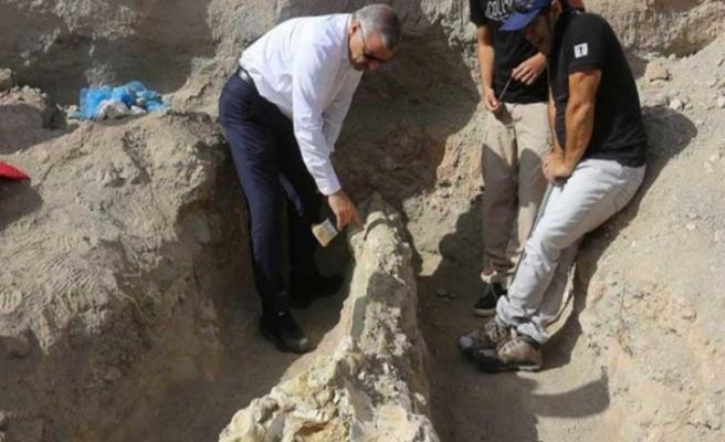 2 metre 40 santim uzunluğunda, 7,4 milyon yıllık!