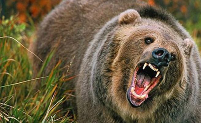 Uludağ'da ayı korkusu!